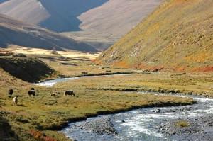 Do Tarap Lower Dolpo Trek Nepal Trekking Hike Hiking Himalayas