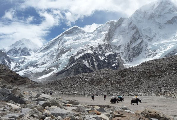 Yaks Gorak Shep 3 Three Passes Trek Everest Base Camp EBC Trek Nepal Trekking Hike Hiking Khumbu Valley Himalayas