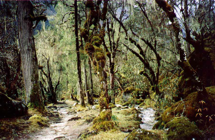 Forest Mera Trekking Peak Hinku Valley Trek Nepal Himalayas Hike Hiking