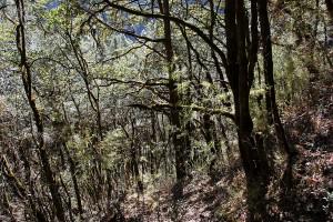 Trees Langtang Valley Trek Trekking Hike Hiking Nepal