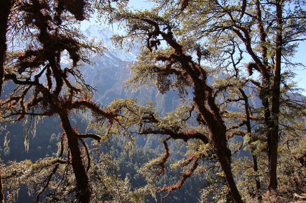 Trees Everest Panorama Trek Khumbu Valley Trekking Hike Hiking Nepal