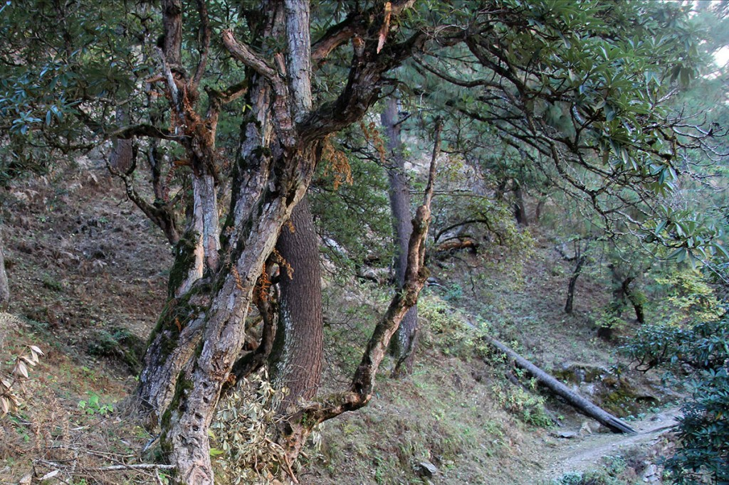 Forest Tamang Heritage Trail Trek trekking hike hiking nepal