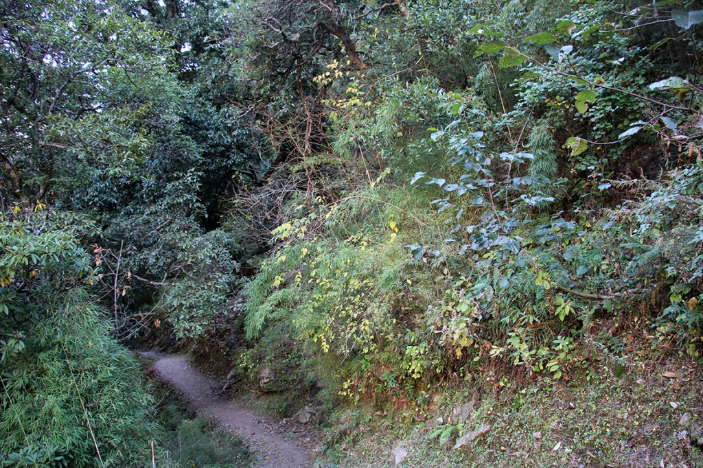 Forest Ghorepani Poon Hill Trek trekking hike hiking nepal
