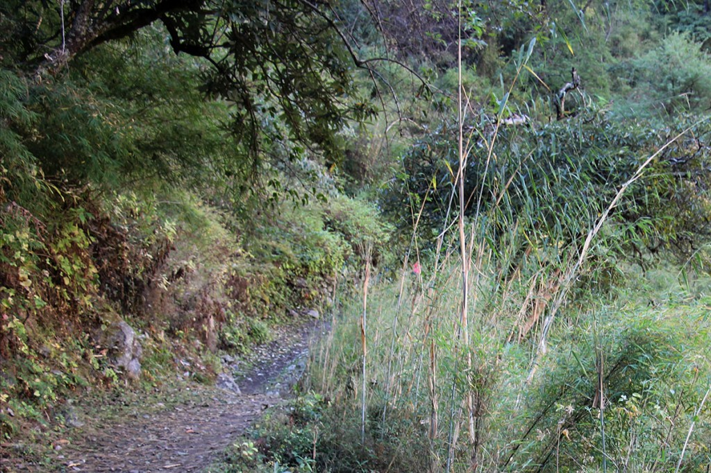 Ghalegaun Trek trekking hiking hike Forest Nepal