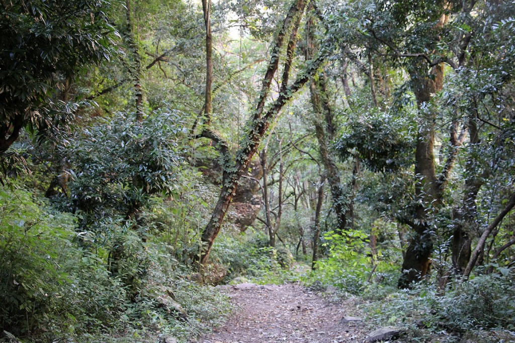 Forest Tsum Valley Trek Trekking Hike Hiking Nepal