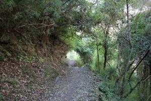 Forest Tsum Valley Trek Trekking Hike Hiking Nepal