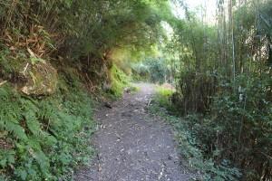 Ghorepani Poon Hill Trek trekking hike hiking nepal bamboo