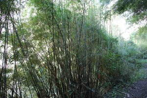 Bamboo Langtang Valley Trek Trekking Hike Hiking Nepal