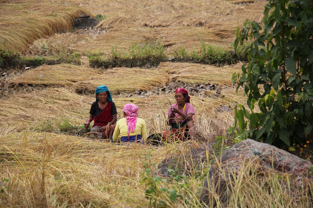 Fieldwork Rara Lake Trek Trekking Hike Hiking Nepal