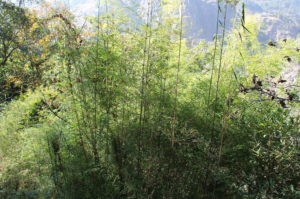 Bamboo Tamang Heritage Trail Trek trekking hike hiking nepal