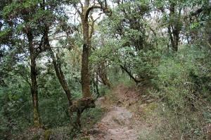 Forest Annapurna Base Camp Trek ABC Sanctuary Trekking Hike Hiking Nepal