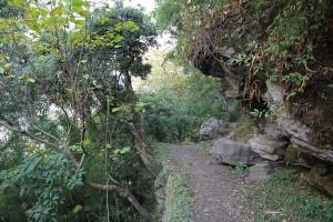 Forest Helambu Gosaikunda Langtang Valley Trek Trekking Hike Hiking Nepal