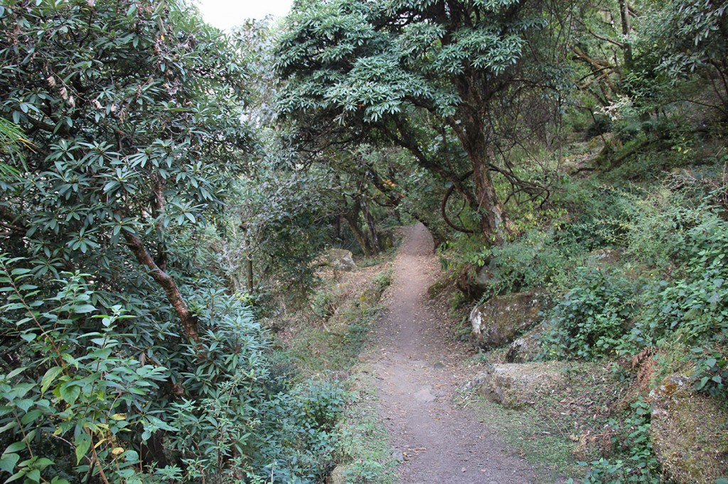 Forest Rara Lake Trek Trekking Hike Hiking Nepal