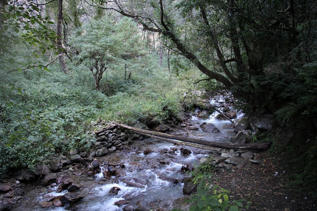 Forest Bridge Stream Rara Lake Trek Trekking Hike Hiking Nepal