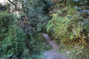 Forest Rara Lake Trek Trekking Hike Hiking Nepal