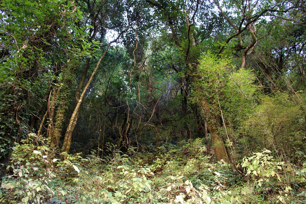 Forest Helambu Valley Trek trekking hike hiking nepal