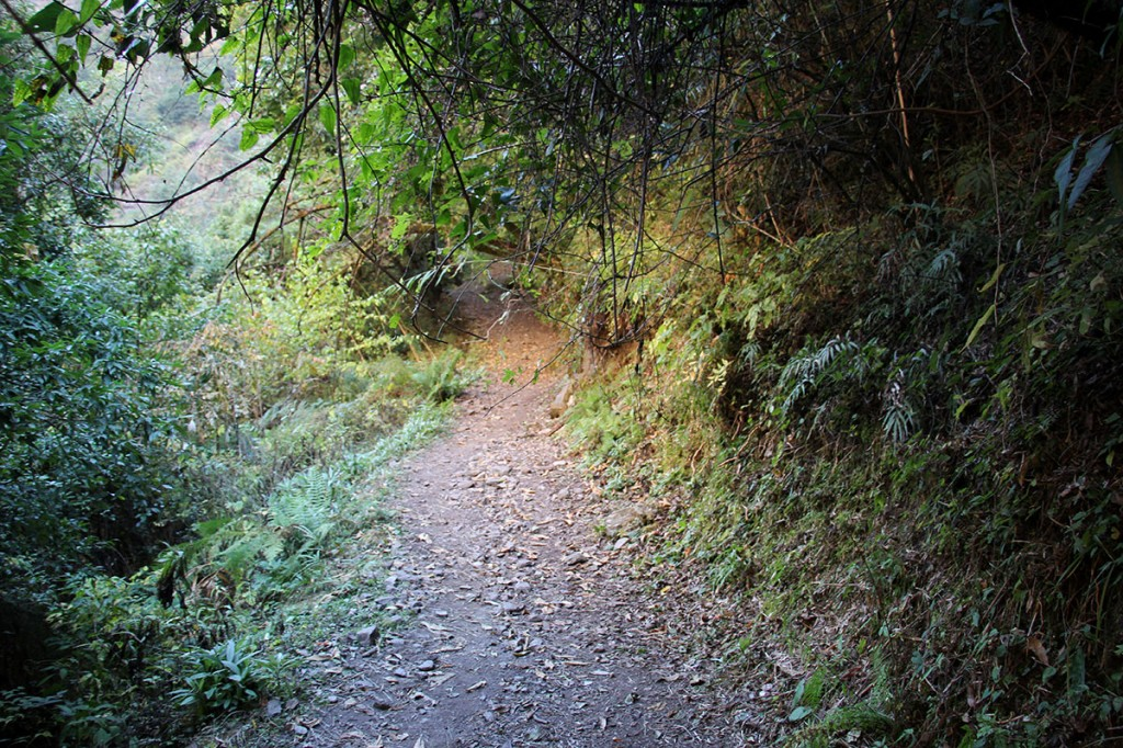 Forest Path Rara Lake Trek Trekking Hike Hiking Nepal