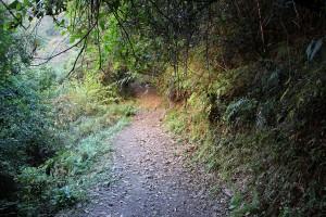 Forest Path Rara Lake Trek Trekking Hike Hiking Nepal