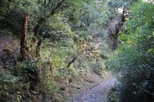 Forest Panch Pokhari Trek Trekking Hike Hiking Nepal