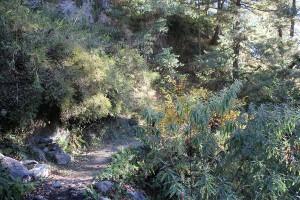Forest Ghorepani Poon Hill Trek trekking hike hiking nepal