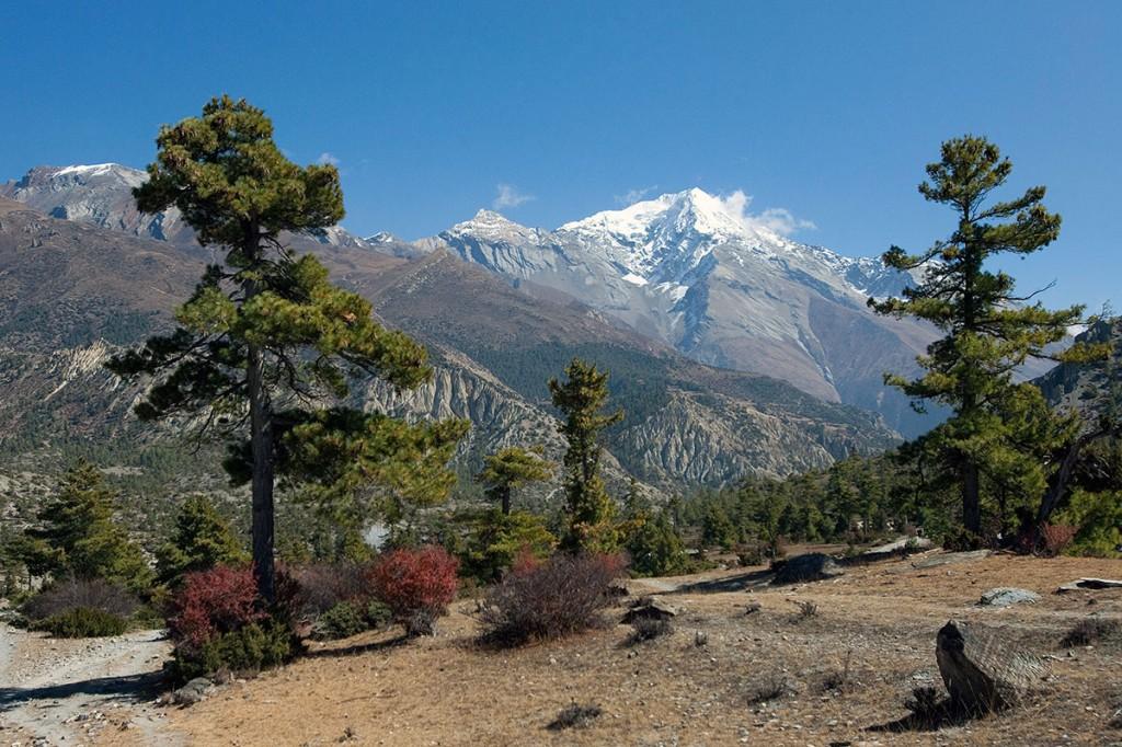 Spruce Annapurna Circuit Trek Trekking Hike Hiking Nepal