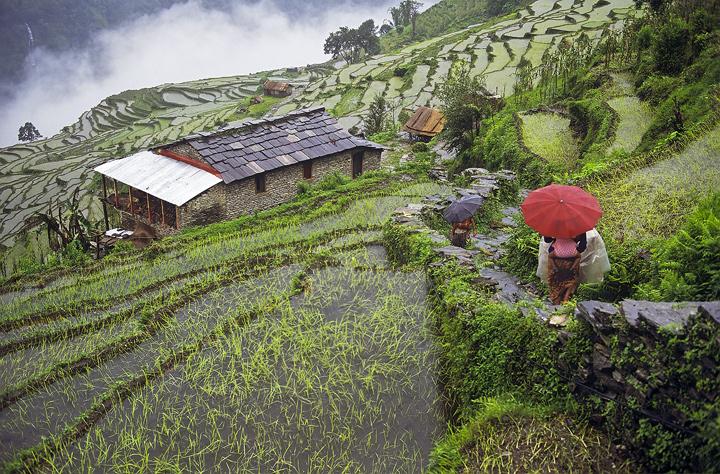 Ghorepani Poon Hill Trek trekking hike hiking nepal