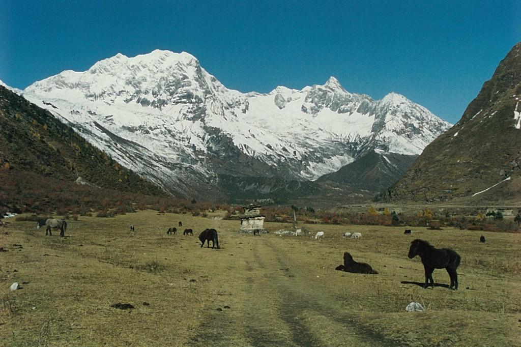 Himalayan Pasture Manaslu Circuit Trek Nepal Trekking Hike Hiking Himalayas