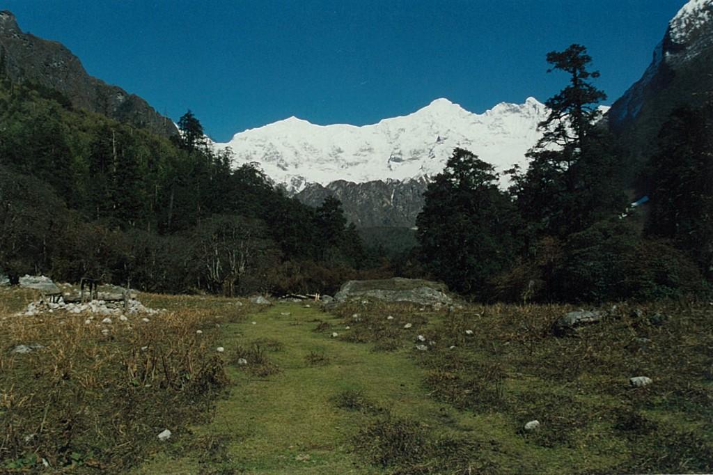 Forest Glade Manaslu Circuit Trek Nepal Trekking Hike Hiking Himalayas