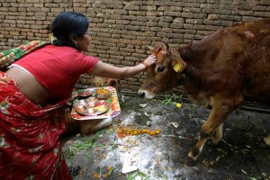 Tihar Deepawali Nepal Hindu Buddhist Religion Festival Festivals Religious Cultural Tourism Temple Dancing Dance