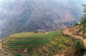 House Terraced Hill Helambu Gosaikunda Langtang Valley Trek Trekking Hike Hiking Nepal