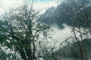 Rhododendron Helambu Gosaikunda Langtang Valley Trek Trekking Hike Hiking Nepal